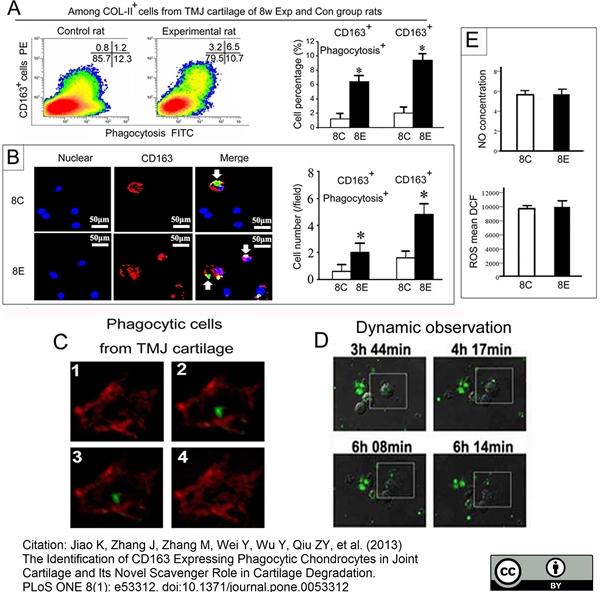 CD163 Antibody | ED2 gallery image 12