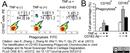 CD163 Antibody | ED2 thumbnail image 15