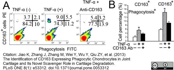 CD163 Antibody | ED2 gallery image 15