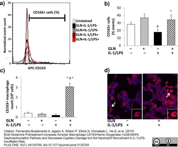 CD163 Antibody | ED2 gallery image 17
