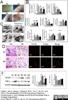 CD163 Antibody | ED2 thumbnail image 11