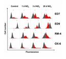CD172a Antibody | ED9 thumbnail image 7