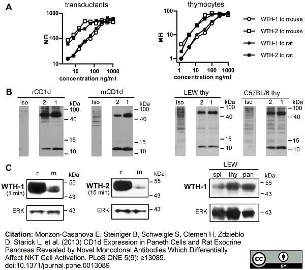 CD1d Antibody | WTH1 gallery image 4