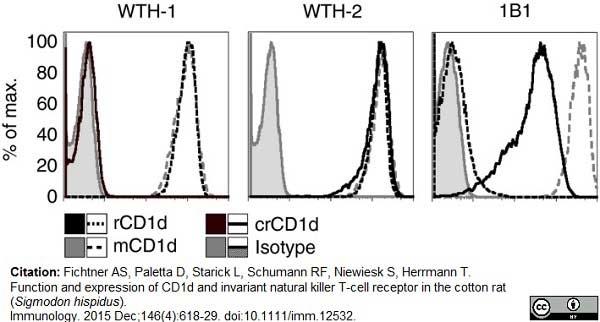 CD1d Antibody | WTH1 gallery image 9