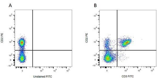 CD2 Antibody   OX-34 gallery image 3