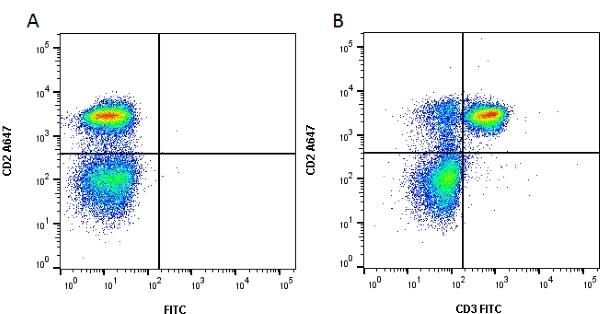 CD3 Antibody   1F4 gallery image 1