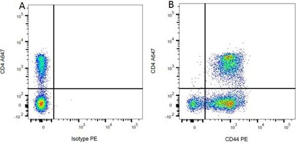 CD4 Antibody | OX-35 gallery image 6