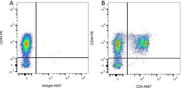 CD4 Antibody | OX-35 gallery image 7