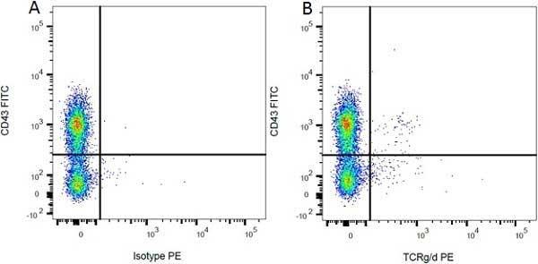 CD43 Antibody   W3/13 gallery image 3