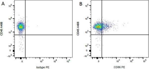 CD45 Antibody | OX-1 gallery image 8