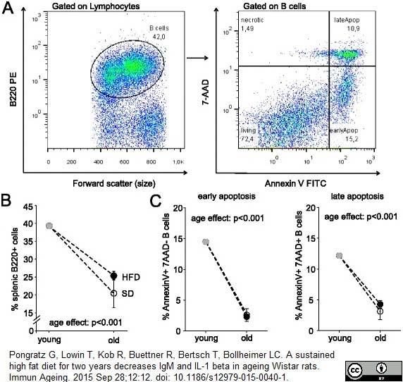 CD45RA Antibody | OX-33 gallery image 9