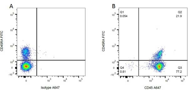 CD45RA Antibody | OX-33 gallery image 2