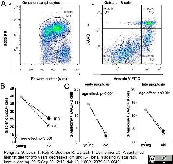 CD45RA Antibody | OX-33 gallery image 8