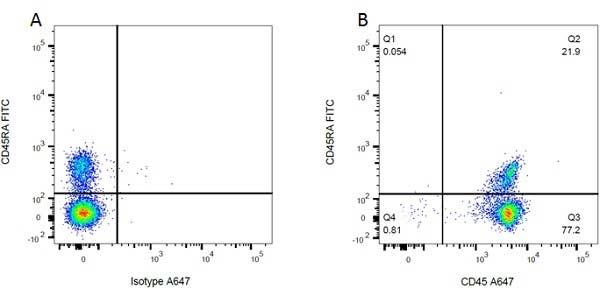 CD45RA Antibody | OX-33 gallery image 3