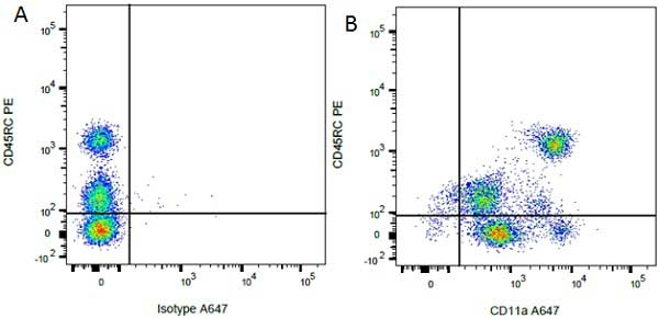 CD45RC Antibody   OX-22 gallery image 3