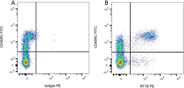 CD45RC Antibody   OX-22 gallery image 1