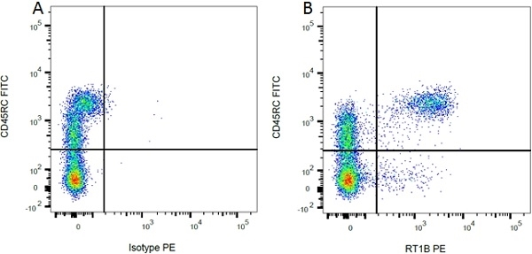 CD45RC Antibody | OX-22 gallery image 3