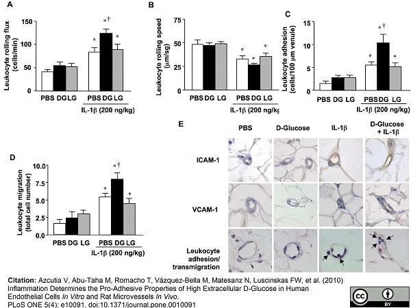 CD54 Antibody | 1A29 gallery image 4
