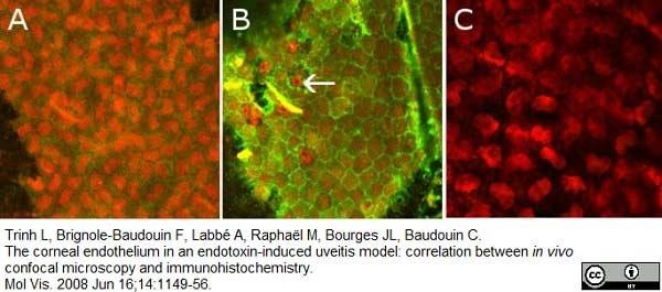 CD54 Antibody | 1A29 gallery image 5