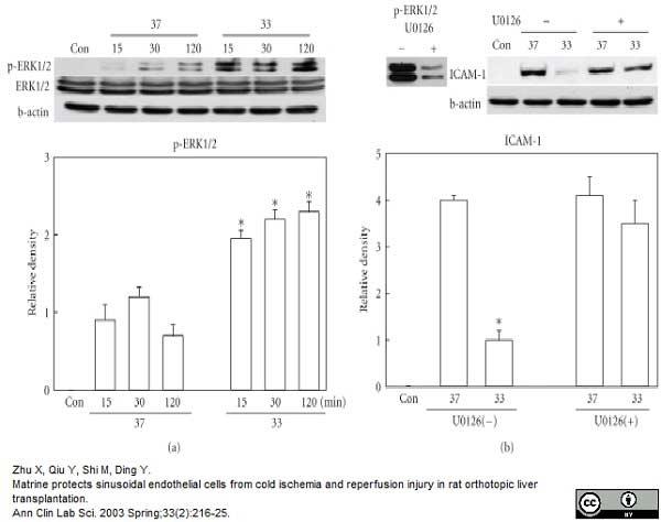 CD54 Antibody | 1A29 gallery image 6