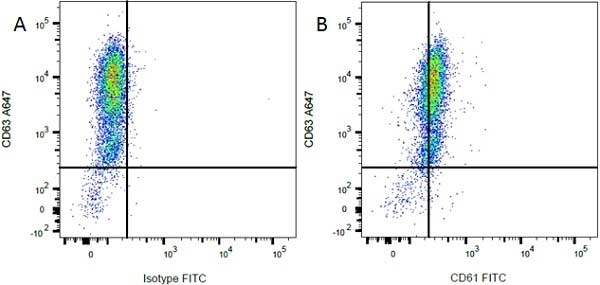 CD63 Antibody | AD1 gallery image 4