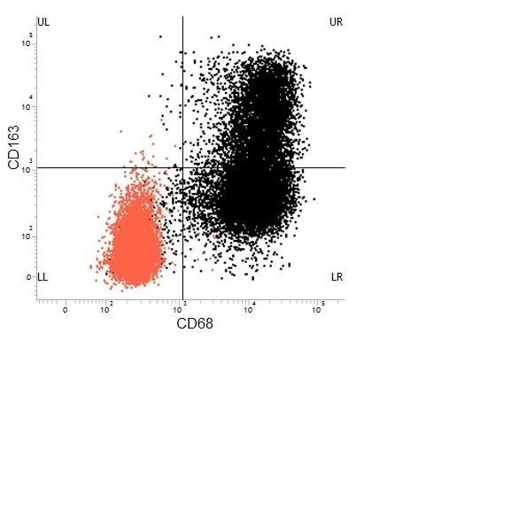 CD68 Antibody | ED1 gallery image 30