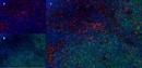 CD68 Antibody   ED1 thumbnail image 14