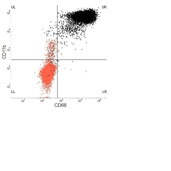 CD68 Antibody | ED1 gallery image 27