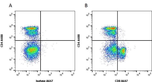 CD8 Alpha Antibody   OX-8 gallery image 1