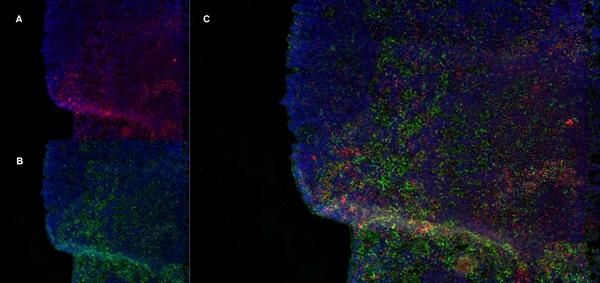 CD8 Beta Antibody | 341 gallery image 5