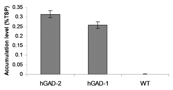 Glutamate Decarboxylase 1/2 Antibody gallery image 1