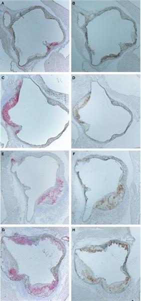 IgG Antibody gallery image 6