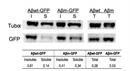 IgG Antibody thumbnail image 1