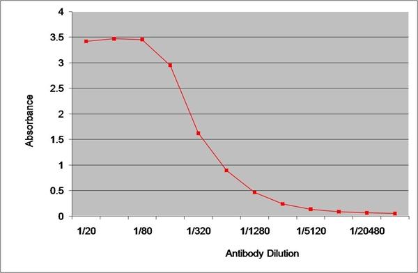 IgG1 Antibody | 8938 gallery image 1