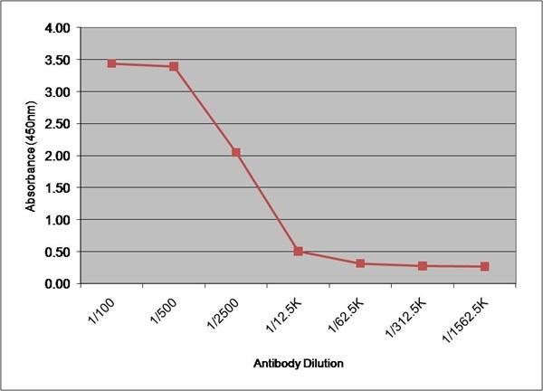 IgG1 Antibody | 8938 gallery image 2