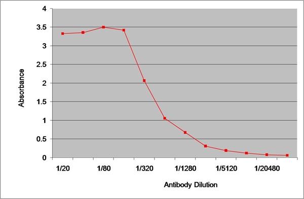 IgG1 Antibody | 8941 gallery image 1