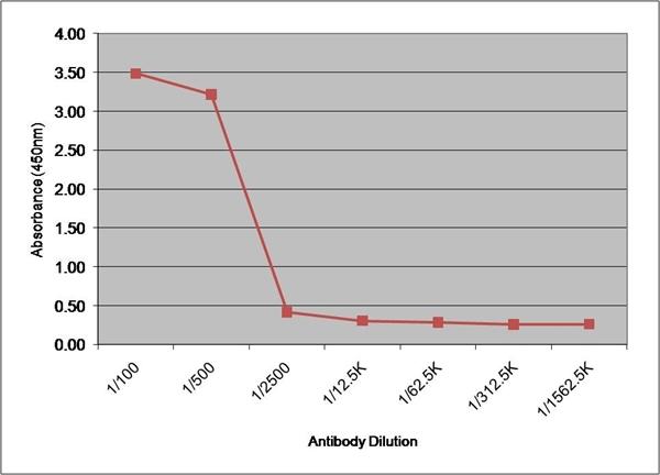 IgG1 Antibody | 8941 gallery image 2