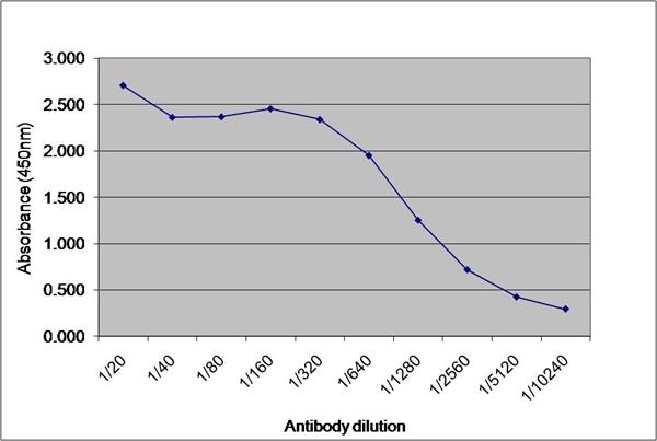 IgG2b Antibody | 9204 gallery image 1