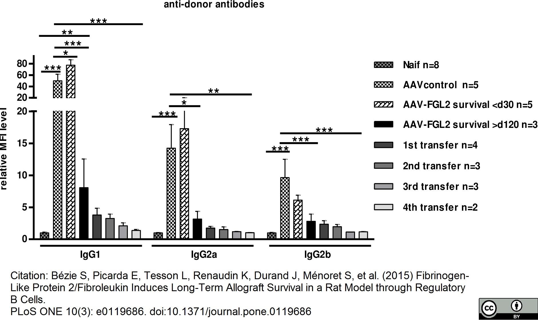IgG2b Antibody | MARG2b-8 gallery image 1