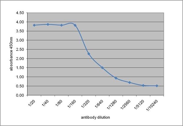 IgG2c Antibody | 9337 gallery image 2