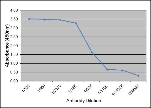 Luteinizing Hormone Antibody   157.10H10 gallery image 1