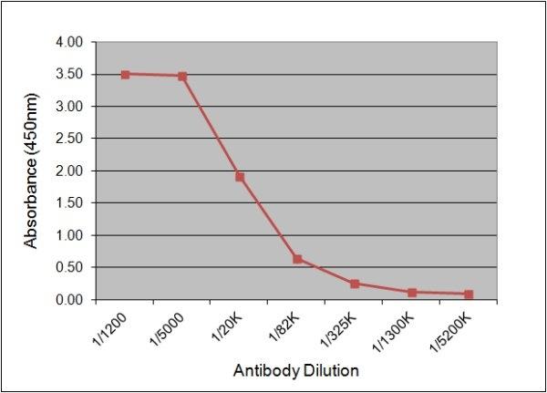 Luteinizing Hormone Antibody   176.8G2 gallery image 1
