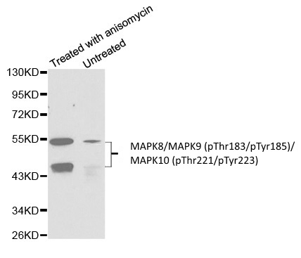 MAPK8/MAPK9 (pThr183/pTyr185)/MAPK10 (pThr221/pTyr223) Antibody gallery image 1