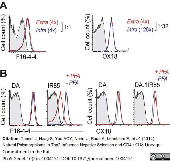 MHC Class I RT1A Antibody | F16-4-4 gallery image 1