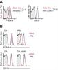 MHC Class I RT1A Antibody | F16-4-4 thumbnail image 1