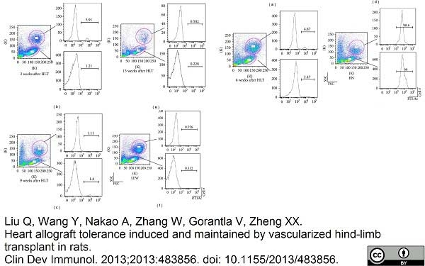 MHC Class I RT1Ac Antibody | OX-27 gallery image 4