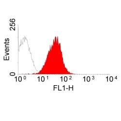 MHC Class I RT1Ac Antibody | OX-27 gallery image 2