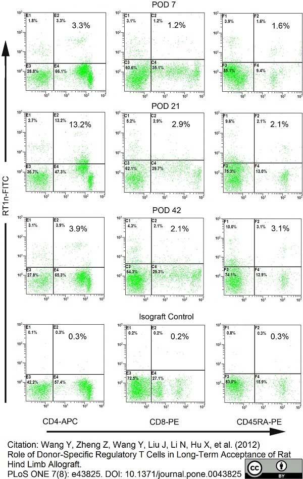 MHC Class I RT1Ac Antibody | OX-27 gallery image 5