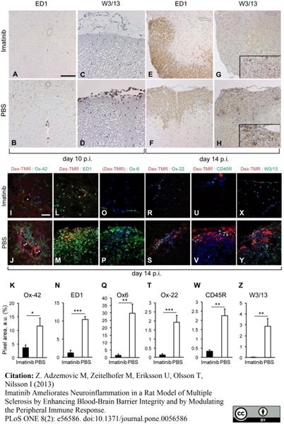 MHC Class II H-2I-Ak/s Antibody | OX-6 gallery image 9