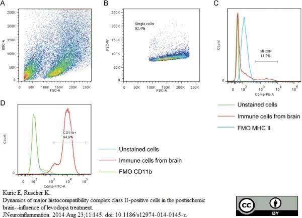 MHC Class II H-2I-Ak/s Antibody | OX-6 gallery image 15